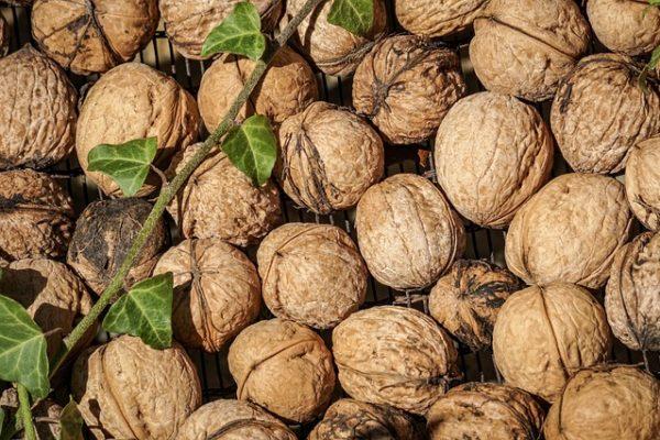 nuts-3747483_640